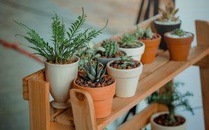 Creatieve manieren om planten in je woonkamer te verwerken